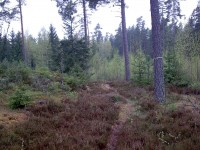 Explore Sweden's forests