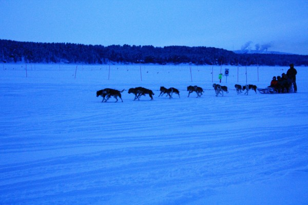 Dog sledding blakenjordan Flickr